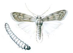 larver i huset