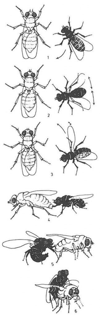 Insekter og miders forspil til parring