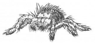 Augustmidens larve er 0,3 mm lang