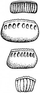Bestemmelse af kakerlak-art ud fra ægkapsler