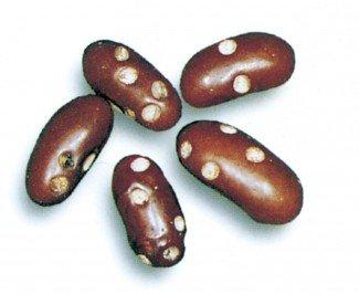 Bønnebiller i brune bønner