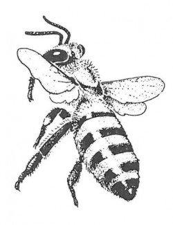 Honningbi under landing