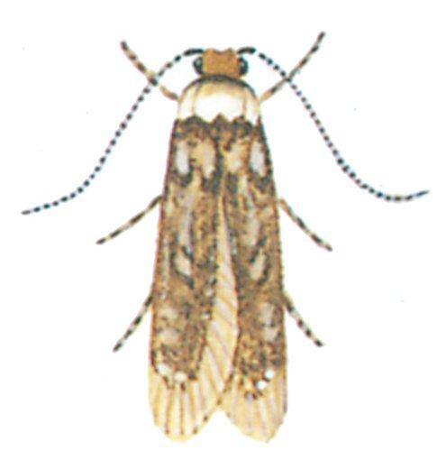 Klistermoel