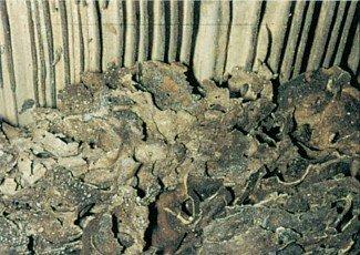 Rede af orangemyrer under gulv
