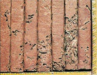 Tobaksbillelarver i cigarer