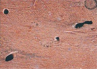 Træ med flyvehuller af træhvepselarver