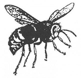 Gedehams alt. hveps, arbejder