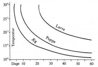 Udviklingstider for kornsnudebillens æg