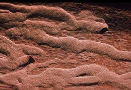 Flyvehuller og larvegange efter bøgebuk