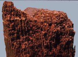 Egestolpe med spor efter borebille