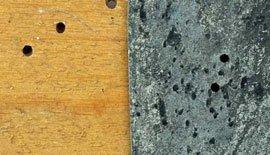 Blød borebille kan gnave sig igennem  bly