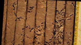 Cigarer angrebet af tobaksbiller