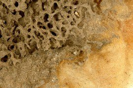 Udsnit af den gule myres kartonrede