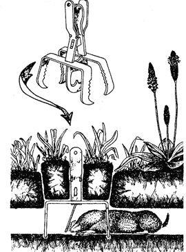 Sådan sættes saksen til mosegris og muldvarp