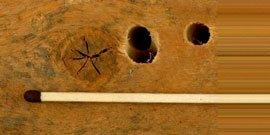 Træhvepsens flyvehuller